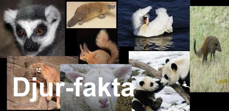 djur-fakta